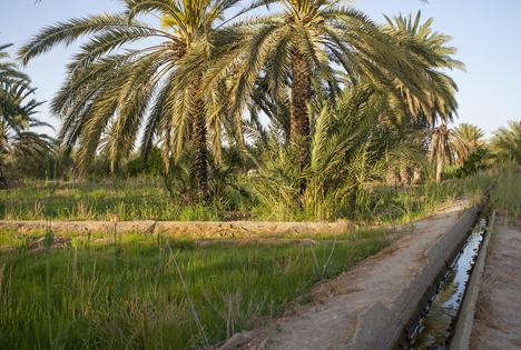 Oase El Hamma, Tunesien Foto © SanLucar