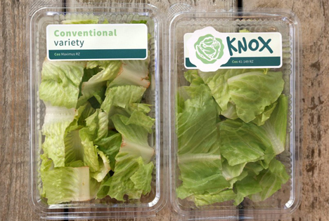 Knox Salat