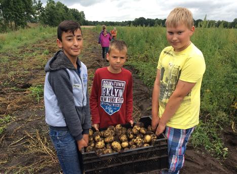BU: Bei der Kartoffel-Buddel-Aktion auf dem Sozialen Ökohof Papenburg lernen die Schüler, woher ihre Pommes kommen. Foto © Demobetriebe Ökologischer Landbau