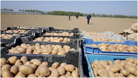 Quelle: PotatoEurope 2017 PotatoaEurope Ausmessen der Versuchsfelder Foto © DLG Benelux.jpg