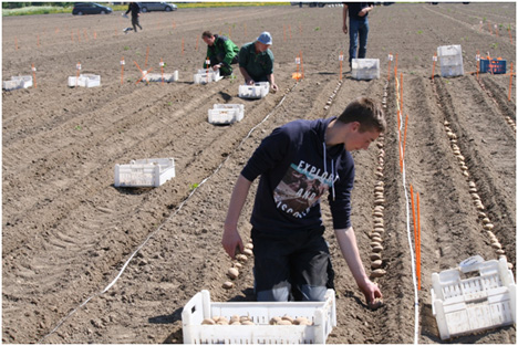 Die Felder werden von Proeftuin Zwaagdijk angelegt. PotatoaEurope Foto © DLG Benelux