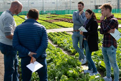 NL: BASF präsentiert auf den Salat-Demotagen Highlights aus dem Salatsortiment
