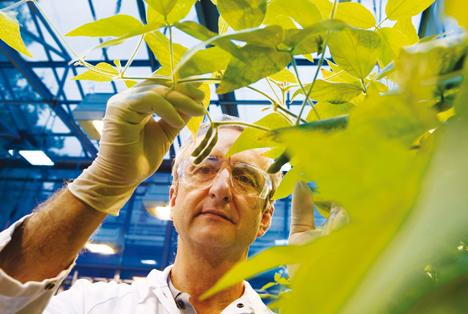 Forscher bei der Begutachtung von Soya-Pflanzen. Foto © Bayer AG