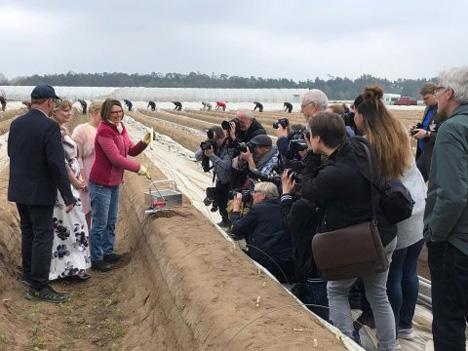 Landwirtschaftsministerin Priska Hinz beim Spargelanstich auf dem Feld. Foto © HMUKLV