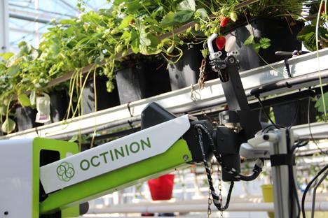 Erdbeerpflückroboter Rubion. Foto © Octinion Agriculture