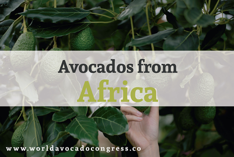 Foto © World Avocado Congress, Corpohass