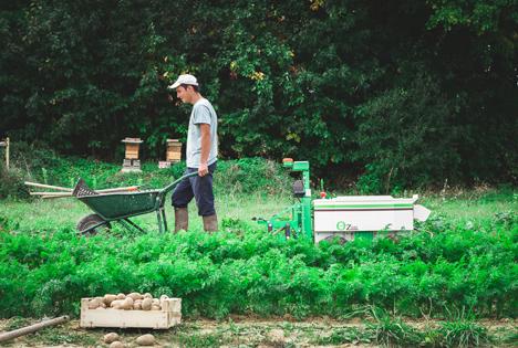 """Im Gemüsebau der Agrarroboter """"Oz"""" Foto © Naio"""