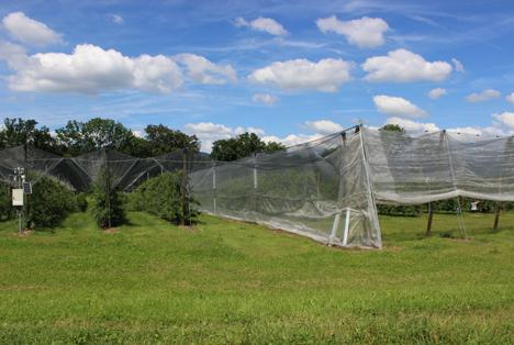 Schweiz: Agroscope-Projekt für umweltschonende Obstproduktion