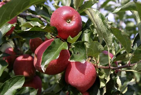 Apfel Foto © AMA Marketing