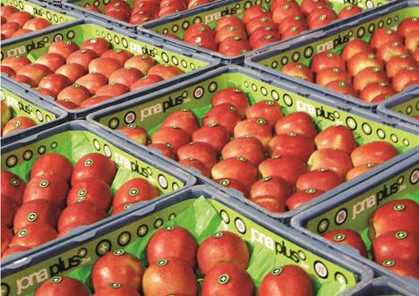 Belgische Fruitveiling (BFV)