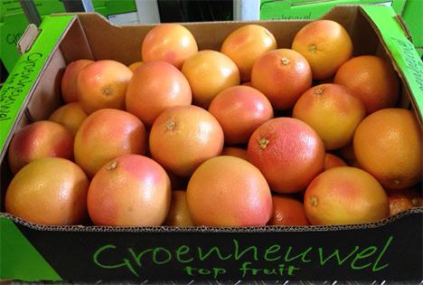 Die Grapefruits von Groenheuwel. Bild: BioTropic GmbH