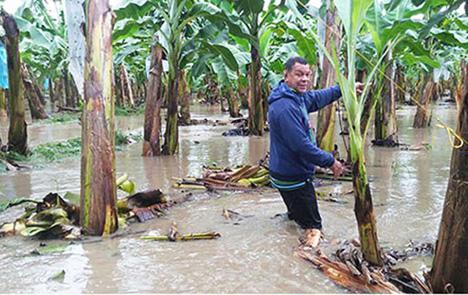 Hurrikan Matthew zerstört Felder und Häuser von Fairtrade-Produzenten in Haiti und Kolumbien