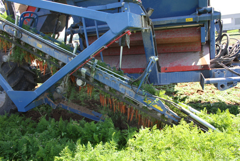 Möhrenroder in Aktion. © Agrarmarkt Informations-Gesellschaft mbH