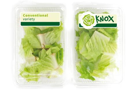 """Knox™ - Delayed pinking in fresh cut lettuce"". Foto Rijk Zwaan"