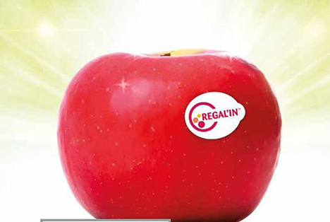 Apfel Regal'In™. Foto Website