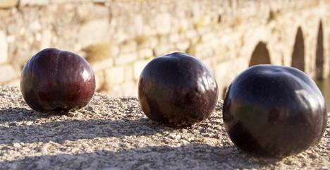 Afruex ESpana l-Ciruela236 Foto © Afruex