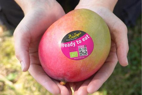 BioTropic Mangos: Reif, aromatisch und bald -ready to eat-. Foto © BioTropic