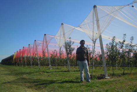 Foto - Veränderung des Lichts steigert Produktion. Foto © Universidad de Concepción