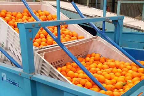 Ernteausfälle in Südafrika: Start in die Übersee-Zitrus-Saison mit weniger Bio-Früchten