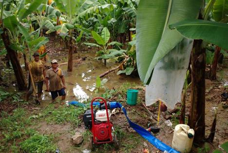 Fotoquelle: TransFair e.V. Fairtrade-Bio-Bananenkooperativen in Peru 2017