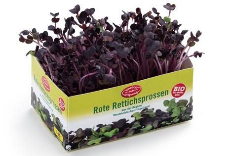 """""""Zurück zum Ursprung"""" Bio Rote Rettichsprossen. Foto © Hofer"""