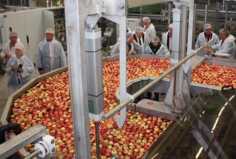 Mehr als 100 Millionen Sachsenobst-Äpfel – sortiert nach Größe, Farbe, Gewicht und innerer Qualität