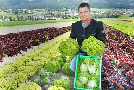 Österreich: Frischer Salat aus Tirol vom Feld in 24 Stunden im SPAR-Supermarkt