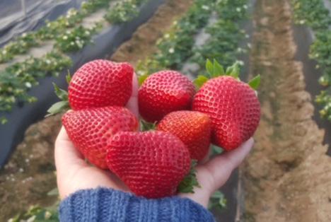 Calinda-Saison 2017 bei Special Fruit steht in den Startlöchern