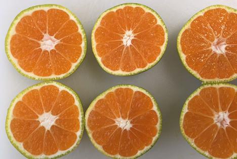UK: Tesco verringert Lebensmittelabfall durch Verkauf von grüneren Satsumas und Clementinen