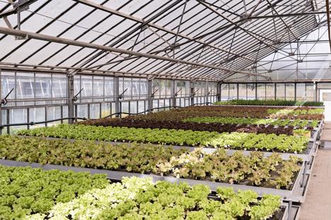 Salatproduktion in der Stadtfarm (Bild: Julia Schmidt). Foto © TopFarmers GmbH