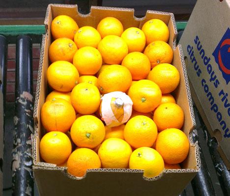 Foto © Empa künstliche Fruchtsensor Zitronen