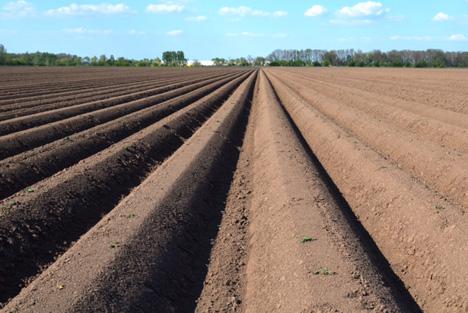 Typisch für Kartoffelflächen sind die Erddämme, die in 75 Zentimeter Abstand stehen. Sie bieten den Knollen optimale Bedingungen für gute Erträge. Foto © Landwirtschaftskammer Niedersachsen/Hollweg