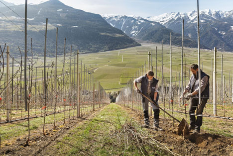 Foto © Südtiroler Apfelkonsortium