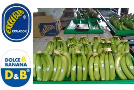 Excelban® Bananen Foto © Anton Dürbeck GmbH