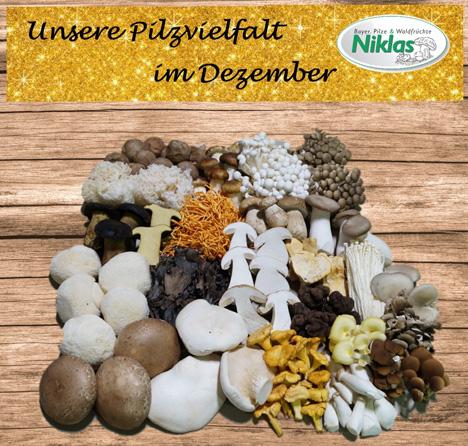 Foto © Bayer Pilze & Waldfrüchte