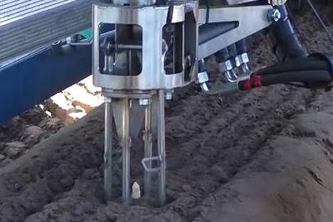 Detail vom Spargelstechen mit dem Ernteroboter (Sparter) von Cerescon. Foto © Cerescon
