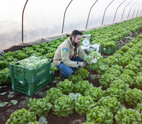 GLOBAL 2000 PestizidReduktionsProgramm. Foto © GLOBAL 2000