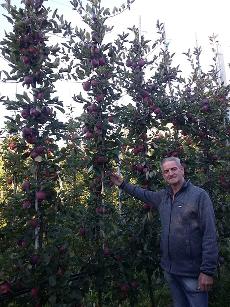 A happy Italian Kissabel® grower in his block in 3rd leaf. Foto © Red Apple Germany
