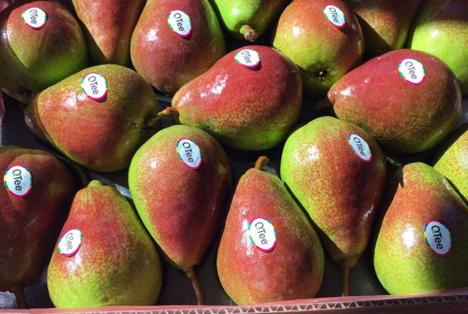 QTee®-Birne. Foto © Fruithandel Wouters