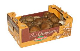 Verpackung: Shiitake-Pilz Prince de bretagne