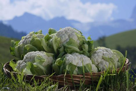 Foto © IDM – Südtirol/Alto Adige Blumenkohl