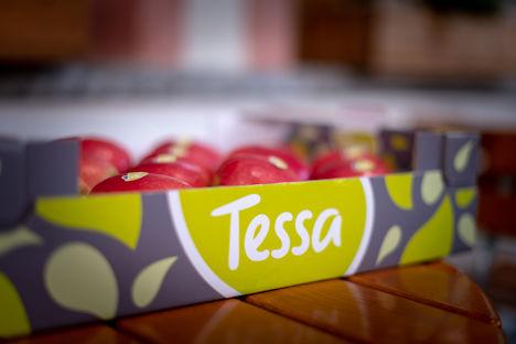 Apfel Clubsorte Tessa