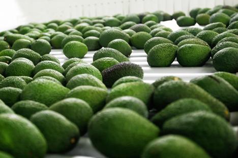 Foto © WAO wao avocado pac-processing-peru
