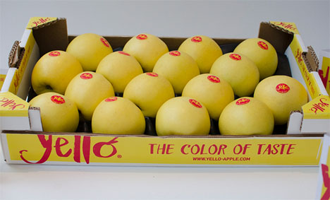 yello®-Apfel. Foto © VOG