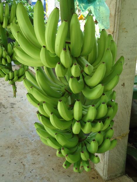 Ausgerechnet Bananen: Wer zahlt den Preis für das Sonderangebot. Foto © Südwind-Institut
