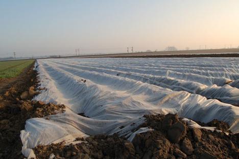 Foto © Landvolk-Pressedienst Kartoffeln
