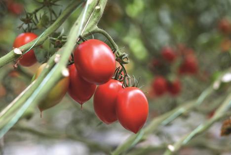 Auf der Fruit Logistica wird Bayer sein neues Gemüsesaatgutportfolio vorstellen. Foto © Bayer AG