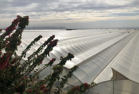 """Hochmodernes Bio-Gewächshaus von Bio Sabor bei Níjar. Foto © """"obs/Fruit Vegetables Europe/Manuel Meyer"""""""