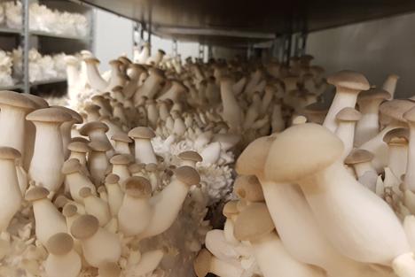 Schweizer Pilze: Steigende Produktionskosten ziehen Preisanpassungen mit sich