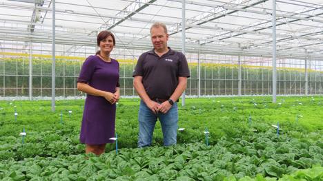 Foto © BASF Vegetable Seeds - Nunhems Netherlands BV